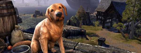 The Bravil Retriever is One of The Elder Scrolls Online Pets Which Was Discontinued