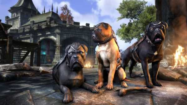 Alliance War Dogs Are the Only Listed Dog Still Available in the Crown Store